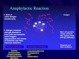 Cascata di eventi immunitari che può portare all'anafilassi