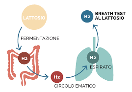 Il razionale del breath test all'idrogeno (H2)