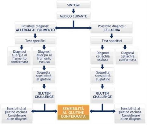 Flow chart diagnostica: escludendo la celiachia e l'allergia al frumento, si fa diagnosi per esclusione di sensibilità al glutine